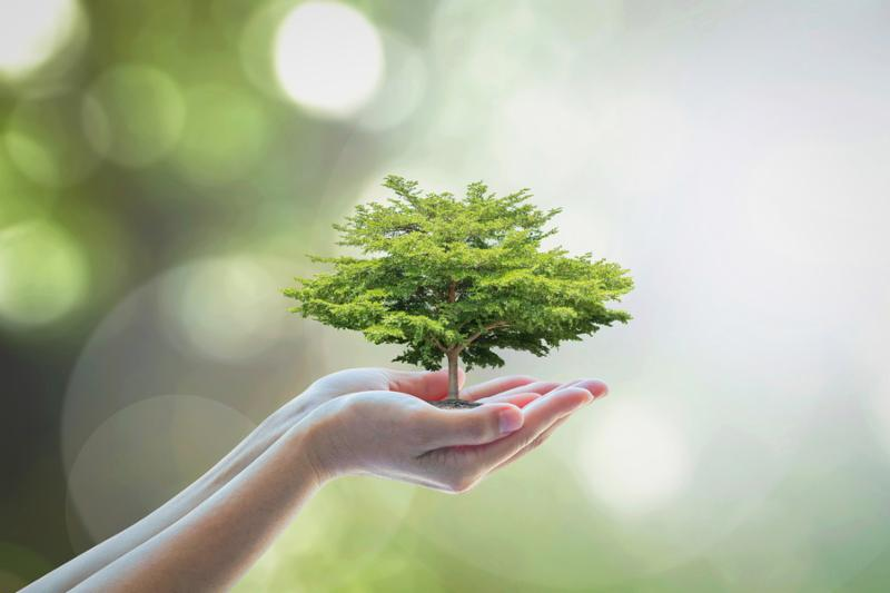 Growing tree to save ecological sustainability_ sustainable environment_ and corporate social responsibility CSR in nature concept