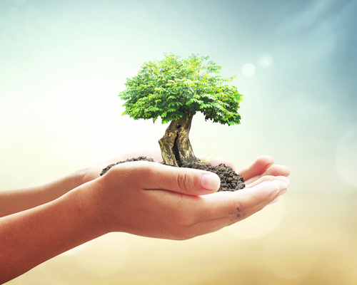 World environment day concept  Human hands holding big tree over blurred abstract beautiful green nature background
