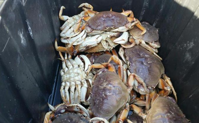 freshly caught crabs in plastic box