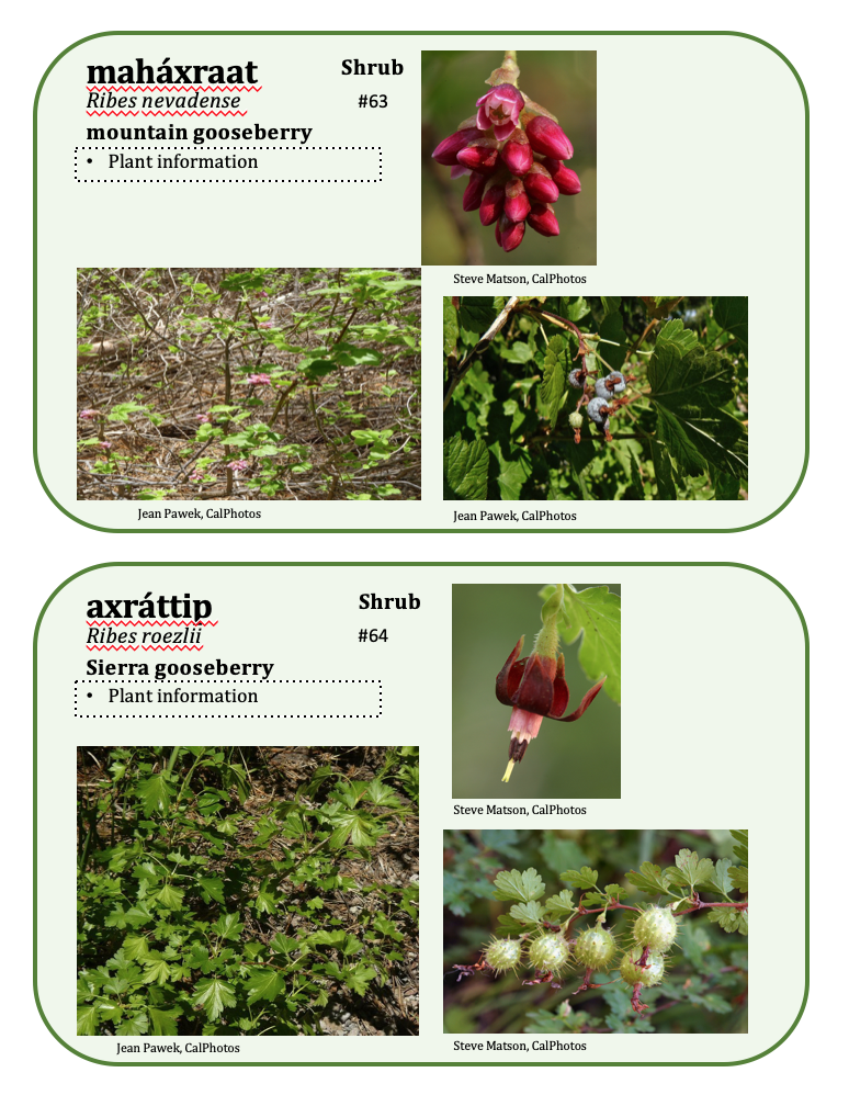 Sample page from new Karuk plant guide