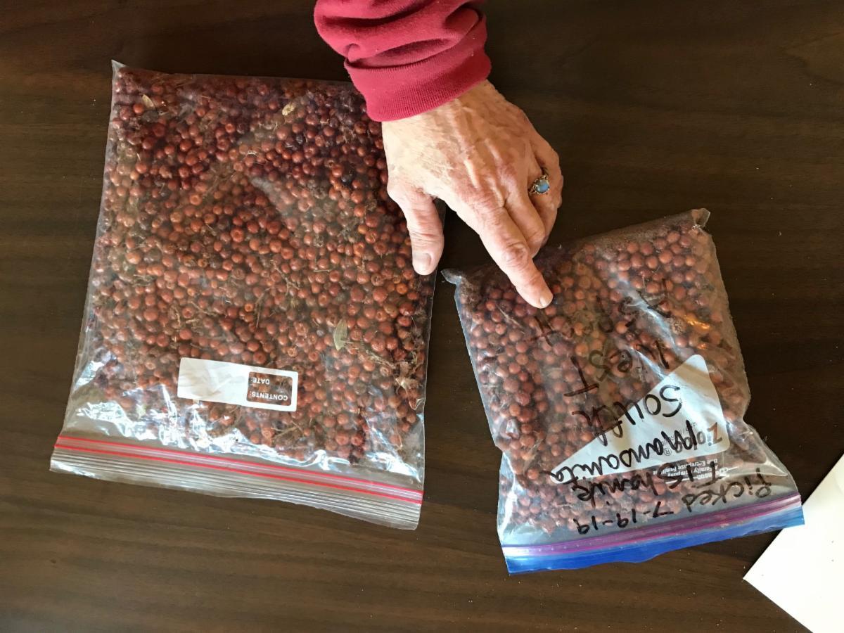 Manzanita harvest results