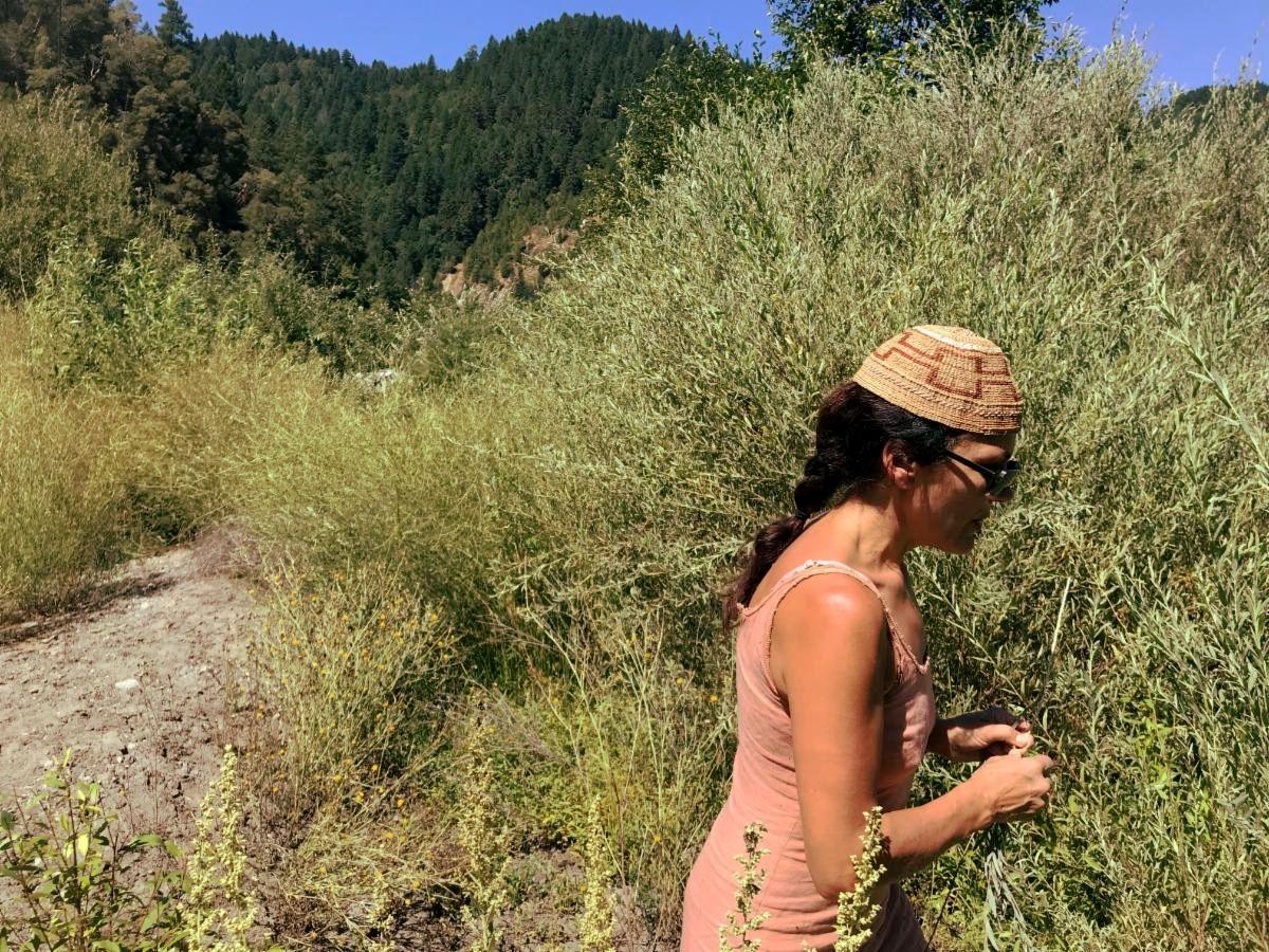 KDNR researcher harvesting willow