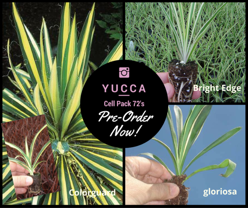 Yucca Product Information