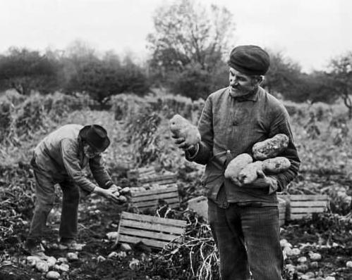 A Verne Morton photograph of farmers