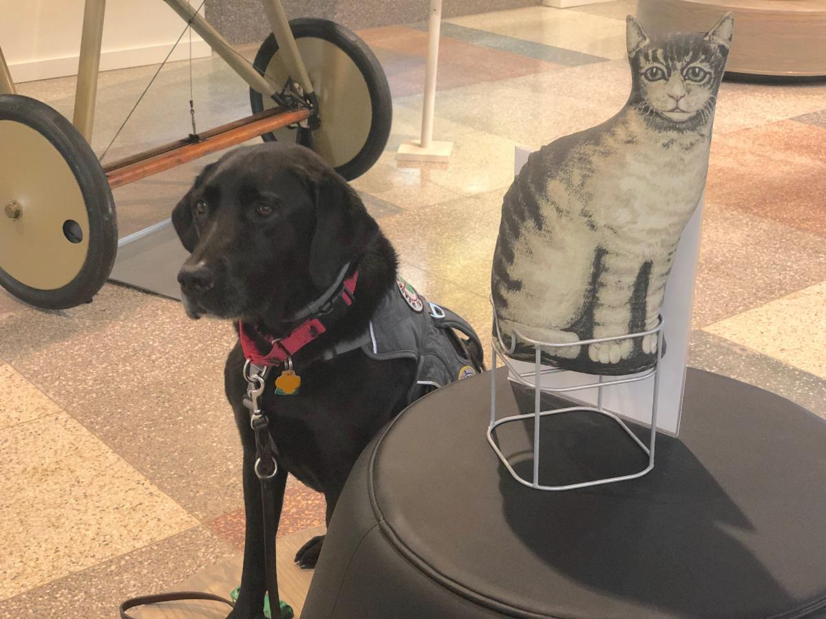 Dog and cat in exhibit hall