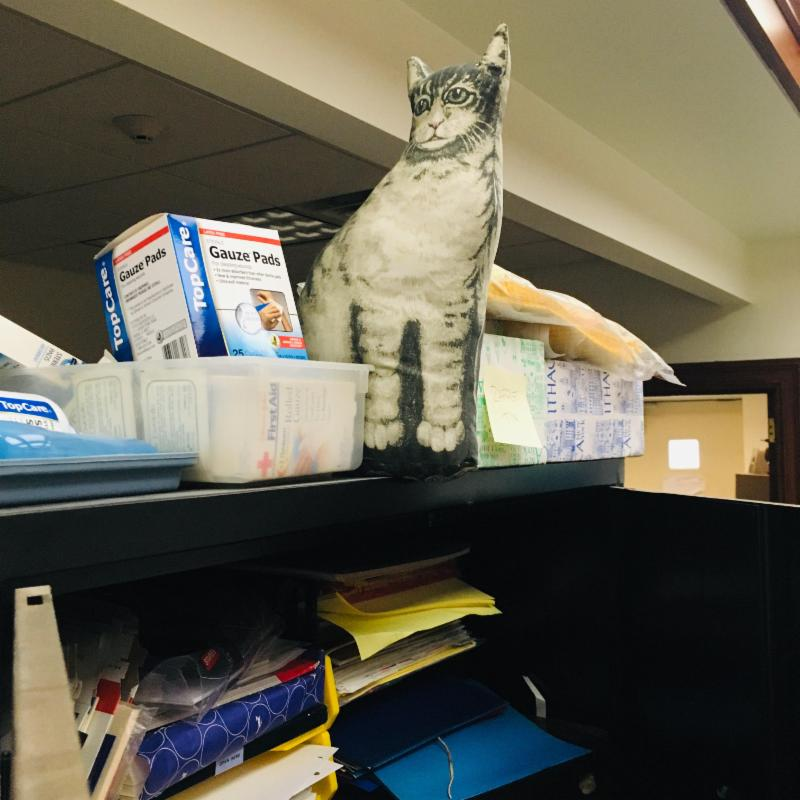 Kitty on shelf