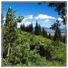 mountain-trees-sm.jpg
