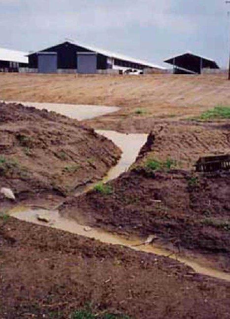 manure runoff
