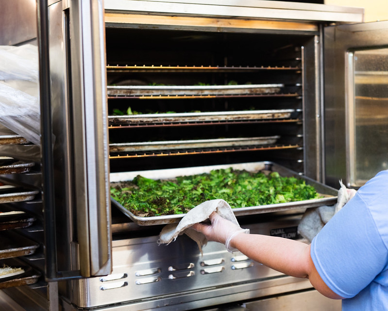 Food service worker puts a tray of broccoli in an oven