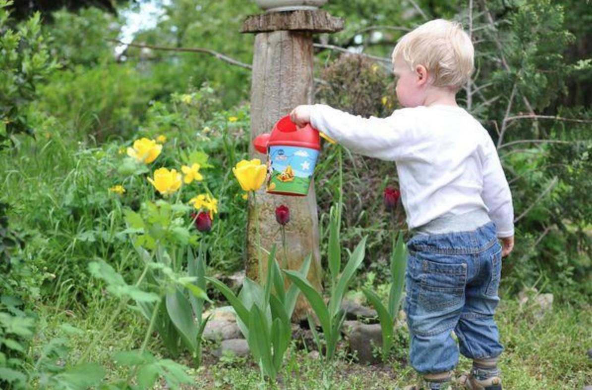 Young child uses a colorful watering can to water some flowers