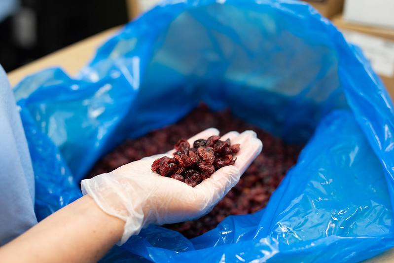Gloved hand of a food service worker holding dried cherries