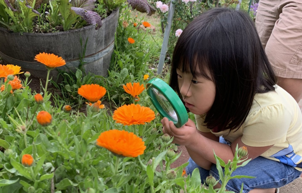 Young girl looks at flowers through a magnifying glass