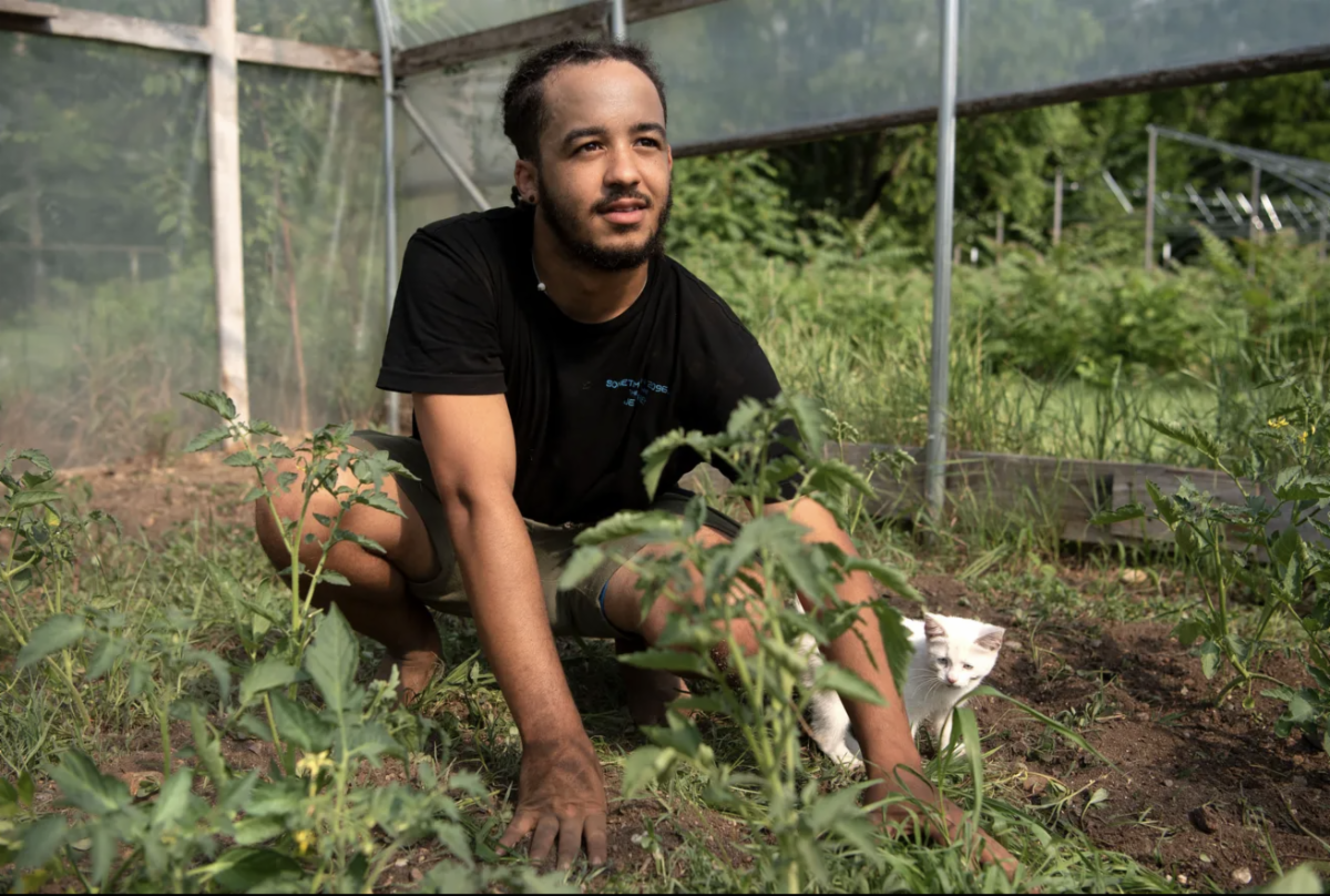 Devon Wilson pulls weeds in his hoophouse. Photo by Alyssa Keown of the Battle Creek Enquirer