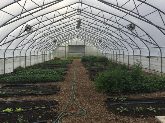 Inside a hoophouse at Drew Farm in Detroit