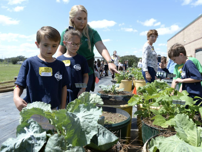Children and adults looking at greens in a school garden bed