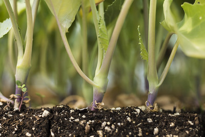 Plants sprout out of soil