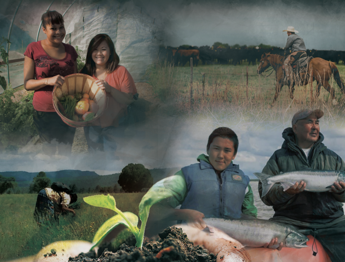 Collage of Native American people interacting with food and farming systems