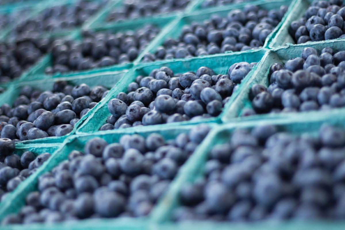 Blueberries in blue pint containers