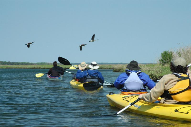 kayaks _ geese