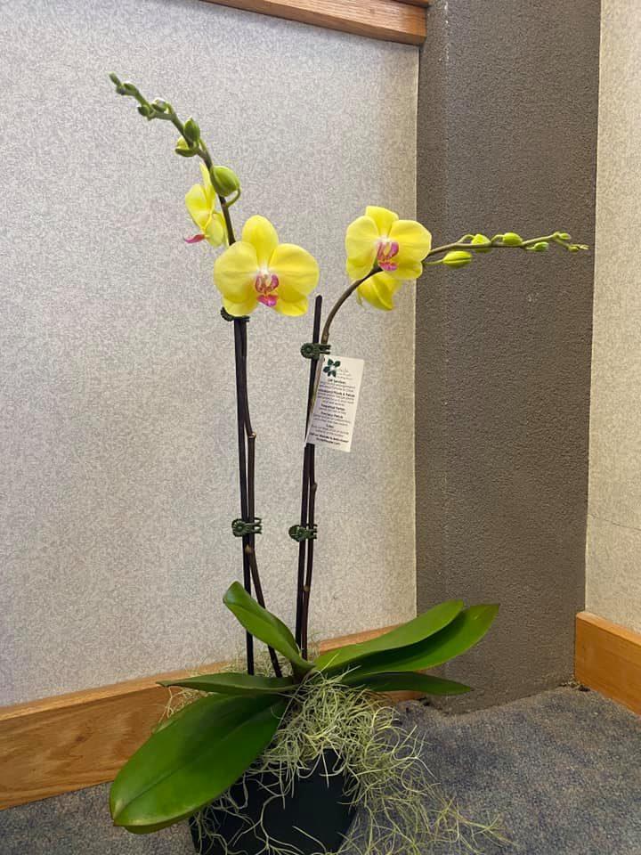 1_orchid_1_foliage_1.jpg