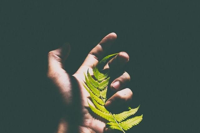 Holding-a-fern-leaf