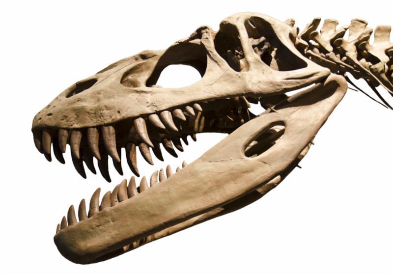 skeleton_dinosaur.jpg