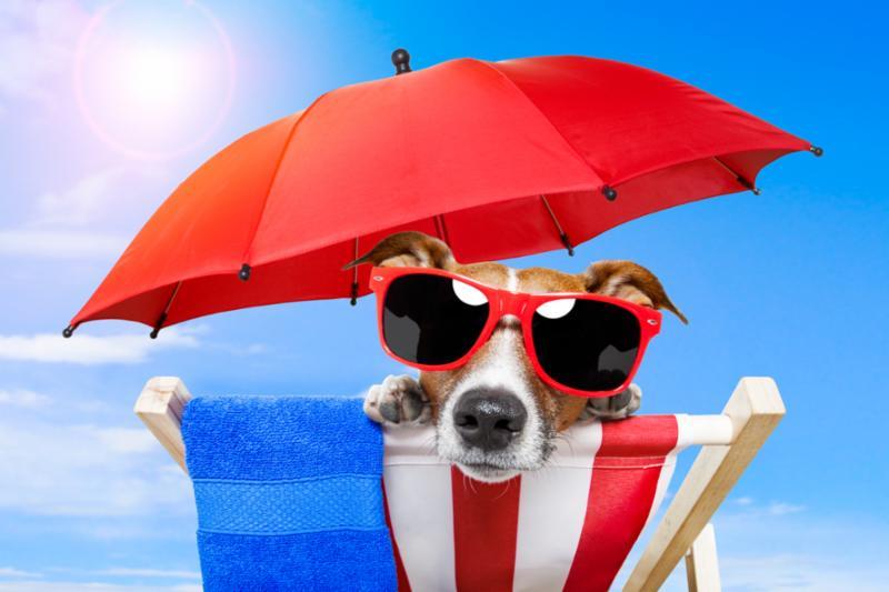dog_sunbathing.jpg