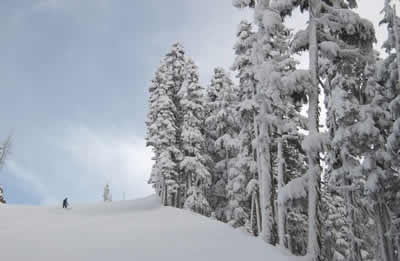 snow-heavy-trees.jpg