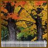 autumn-trees-fence.jpg
