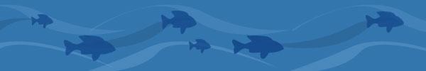 graphic-fish-header.jpg