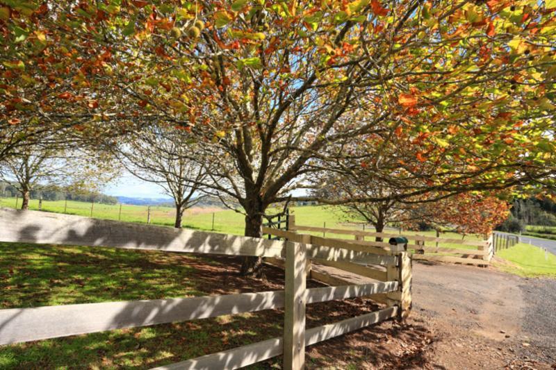 landscape_forest_tree.jpg