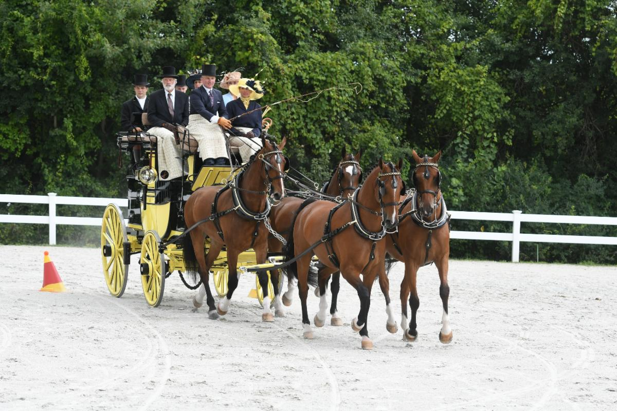 Marc Schoefield and Heidi Johnson driving a 4-in-hand team owned by Harvey Waller. Photo Credit Picsofyou.com