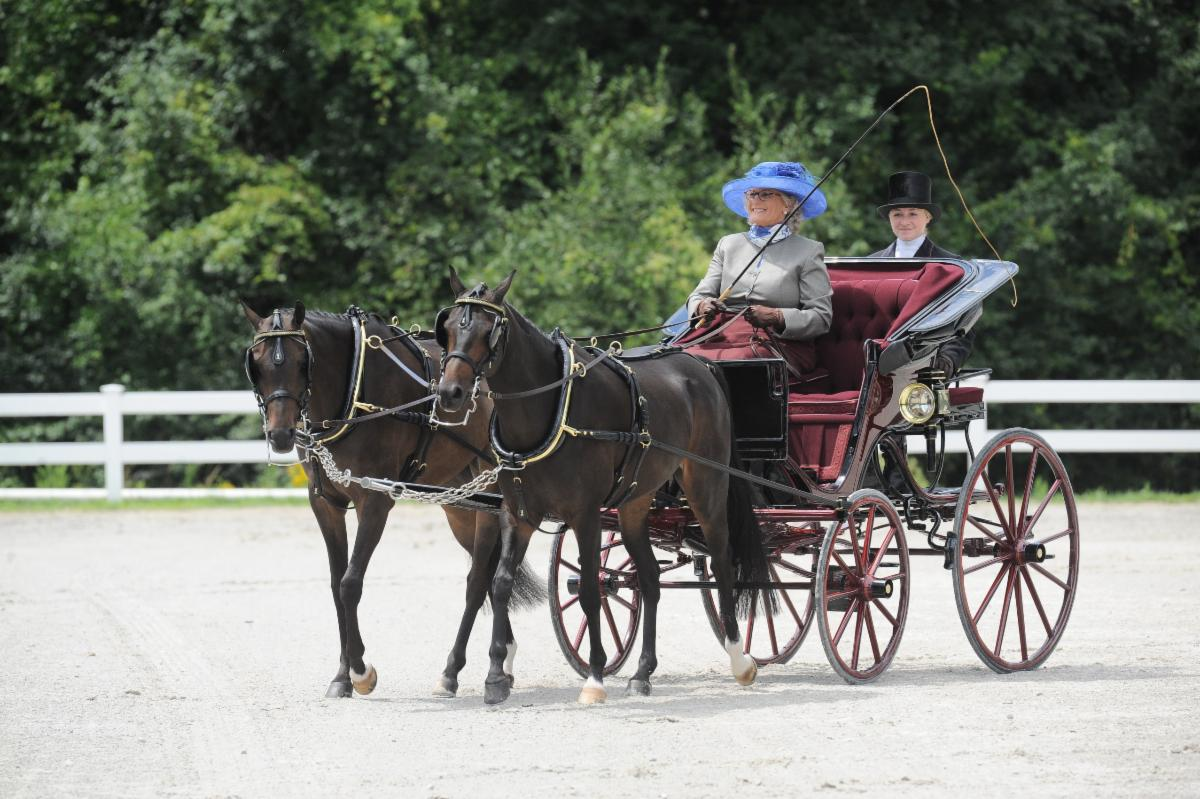 Mary Waller driving her pair of British Welsh sport ponies. Photo Credit Picsofyou.com
