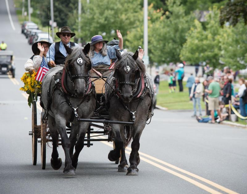 Karl and Laura Riva driving a pair of Brabant blue roan draft horses