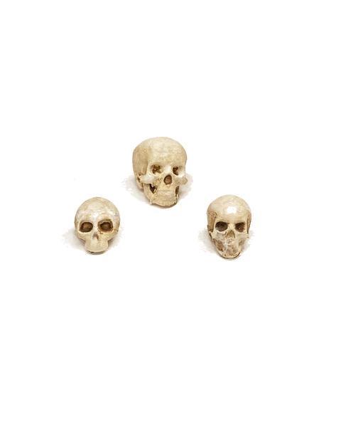 Photo Skulls.jpeg