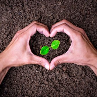 Two hands of the men making heart-shaped surrounding the seedlings are growing.