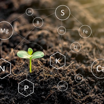 The seedlings are exuberant from abundant loamy soils and have a digital mineral icon needed for planting.