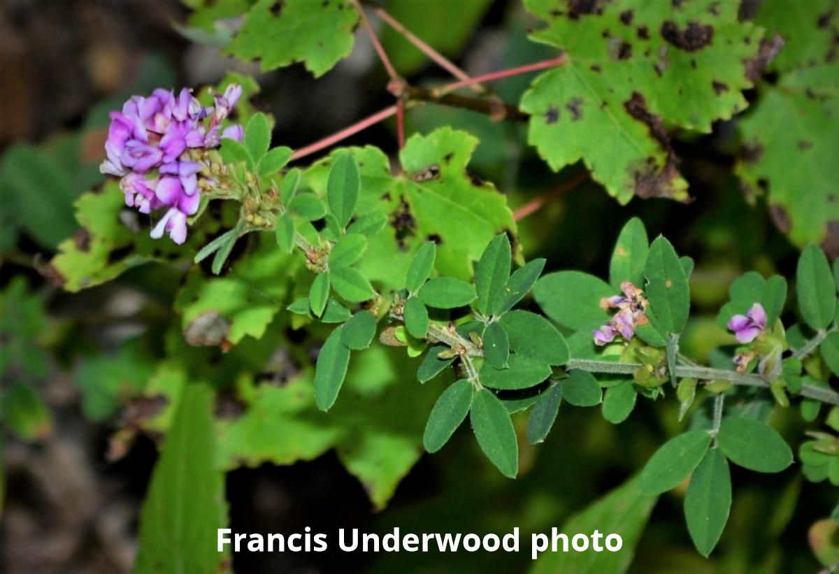 Francis Underwood photo
