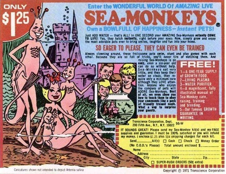 Sea Monkeys Grey Matter