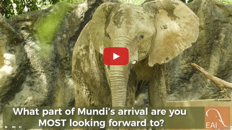 Carol answers questions about Mundi