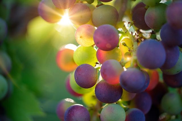 Lifelong Community Learning: Wine Tastings - Oct 22 & Nov 12