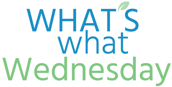 Whats What Wednesday title