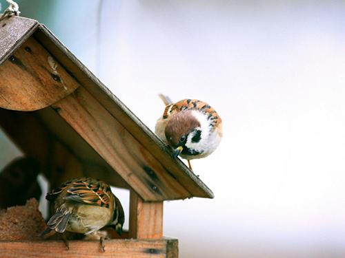 bird feeder cleaning