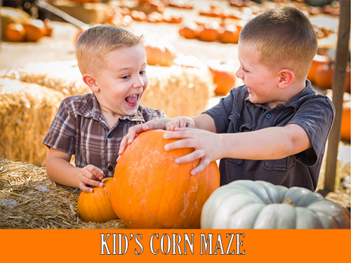 Kid_s Corn Maze