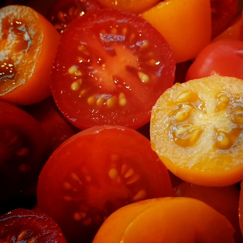 growing tomatoes workshop