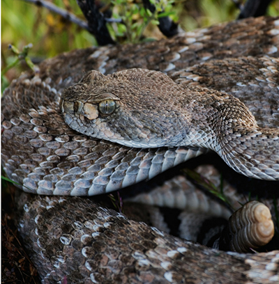 How to Be Snake Safe in the Garden