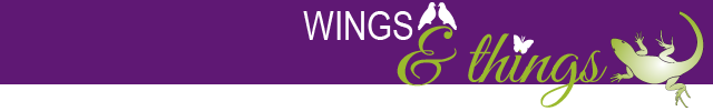 wings and things