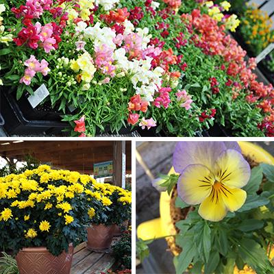 September Blooming