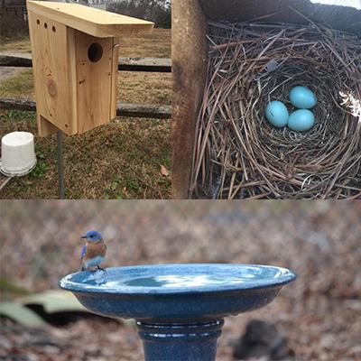 blue bird trail