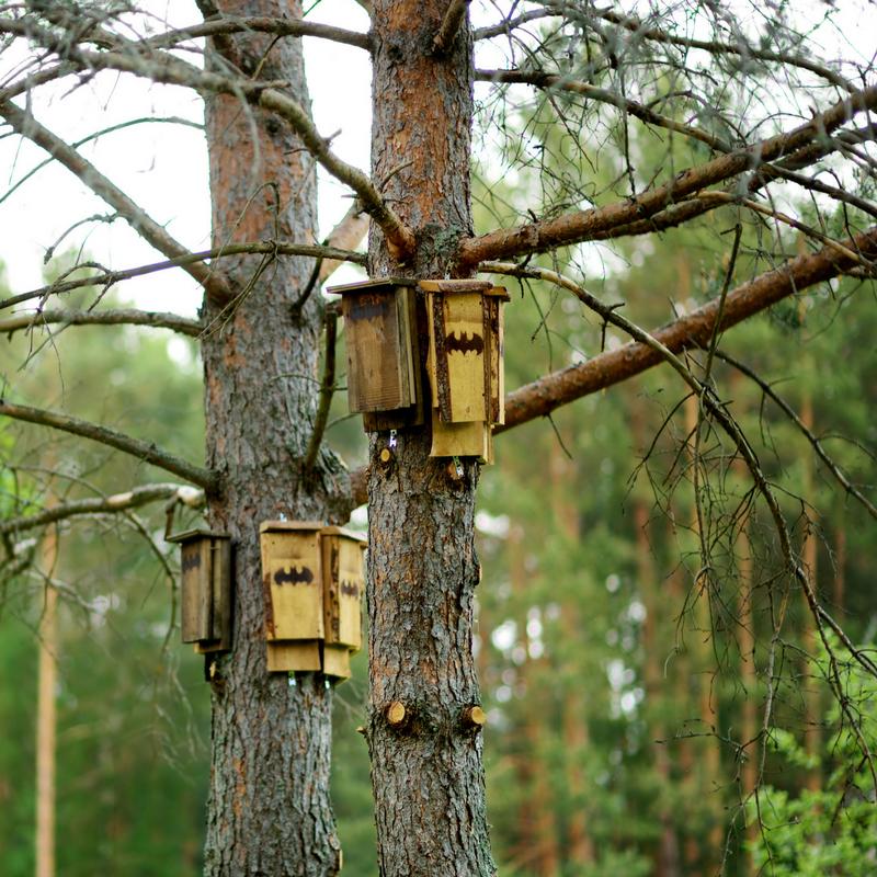 Bats_  Nature_s Pest Control